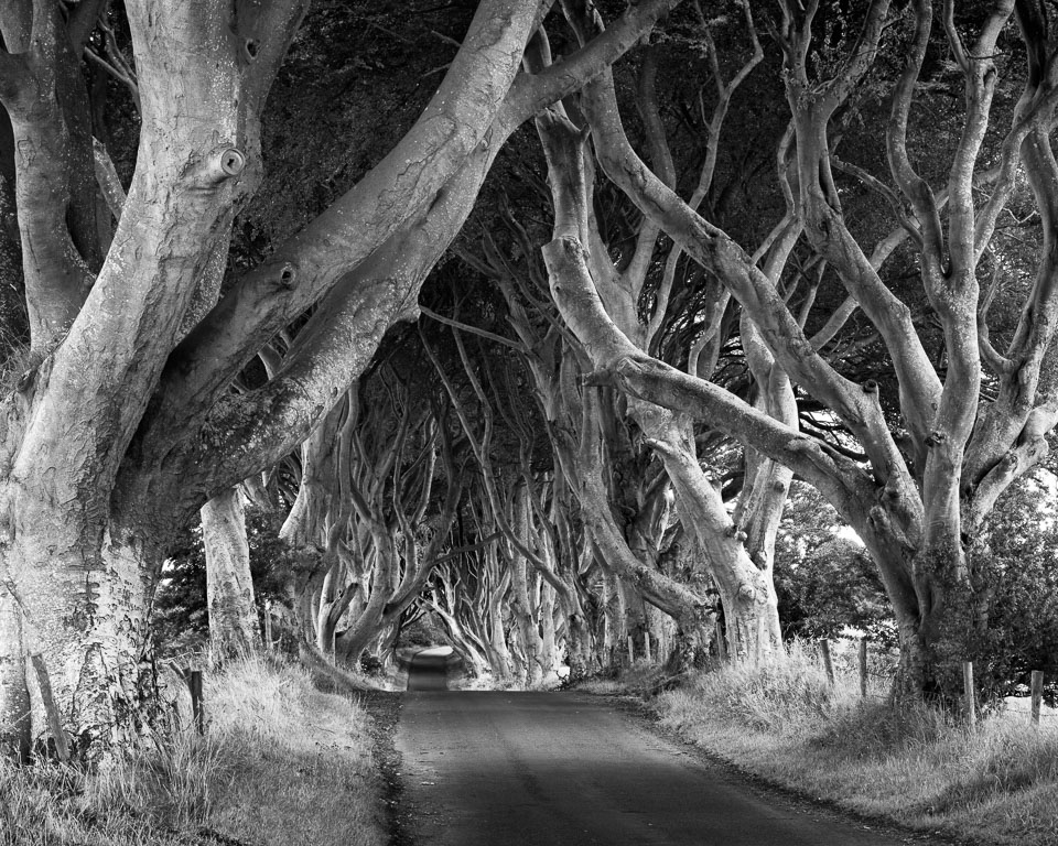 The Dark Hedges, Antrim, Northern Ireland black and white photo