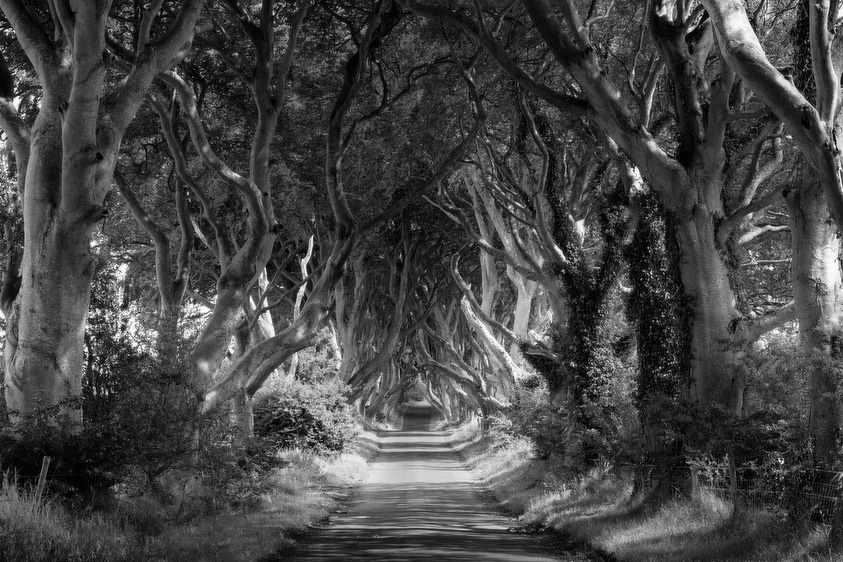 The Dark Hedges, Irish Tree Tunnel Fine Art Black and White Photo, Antrim, Northern Ireland